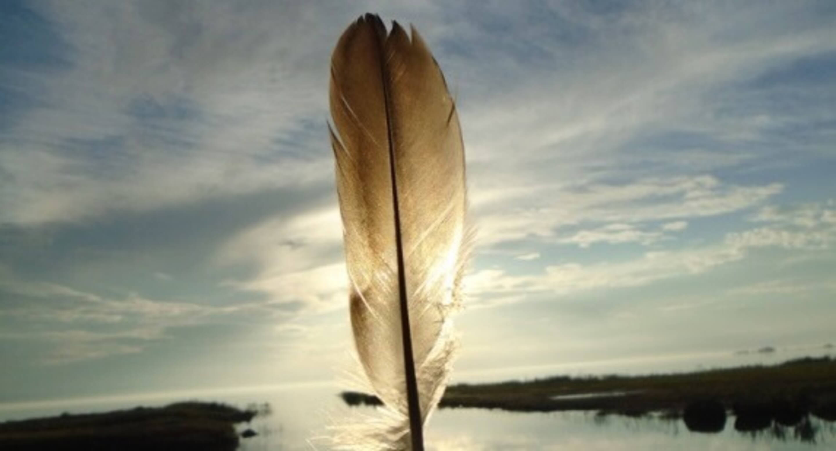 Feather held up against the sun